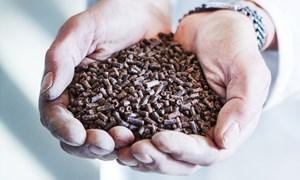 [Infographic] Nhập khẩu thức ăn tăng gánh nặng cho ngành Chăn nuôi