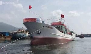 [Video] Tàu vỏ thép thu mua cá lớn nhất miền Trung