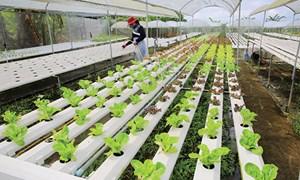 Làm nông nghiệp không cần đất