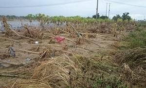 Australia viện trợ 40.000 USD giúp Việt Nam khắc phục hậu quả bão số 12