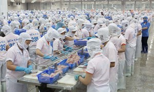 Quản lý vốn lưu động và hiệu quả hoạt động  tại các doanh nghiệp thủy sản Việt Nam