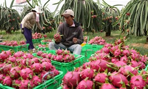 Năm 2018, ngành nông nghiệp đặt mục tiêu xuất khẩu đạt 40 tỷ USD