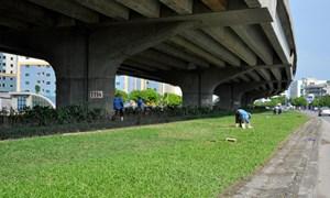 [Video] Hà Nội: Xén thảm cỏ đường Vành đai 3 tránh ùn tắc giao thông