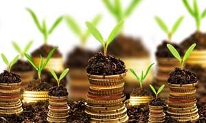 Phát triển thị trường tài chính xanh: Thông lệ quốc tế và thực tiễn tại Việt Nam