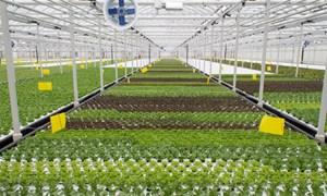 [Video] Dây chuyền trồng rau chỉ tốn vài nhân công ở Canada