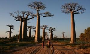 Madagascar: Phần còn lại khác biệt của thế giới
