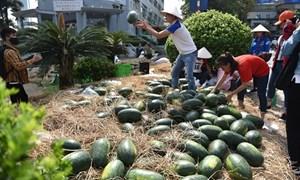 """[Video] Sinh viên """"giải cứu"""" dưa hấu giúp nông dân Quảng Ngãi"""