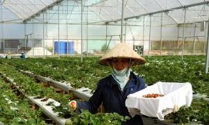 [Infographic] Tiêu chí nào xác định doanh nghiệp nông nghiệp ứng dụng công nghệ cao?