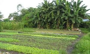 Một số bất cập của pháp luật Việt Nam về thời hạn sử dụng đất nông nghiệp và hướng hoàn thiện