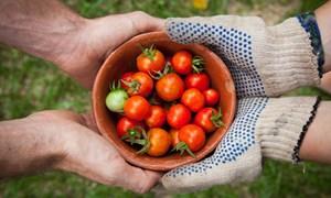 [Video] Ứng dụng giúp nông dân Trung Quốc bán rau được định giá 7 tỷ USD