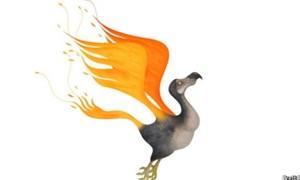 Chim dodo hóa phượng hoàng