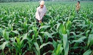 'Đòn bẩy' thúc đẩy đầu tư cho nông nghiệp, nông thôn