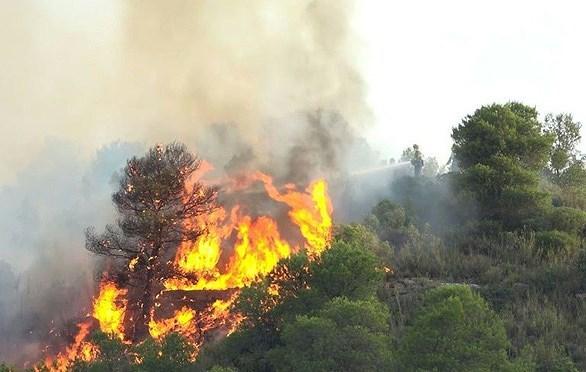 [Ảnh] Nhìn lại những hình ảnh cán bộ, chiến sĩ lực lượng vũ trang Hà Tĩnh dầm lửa cứu rừng
