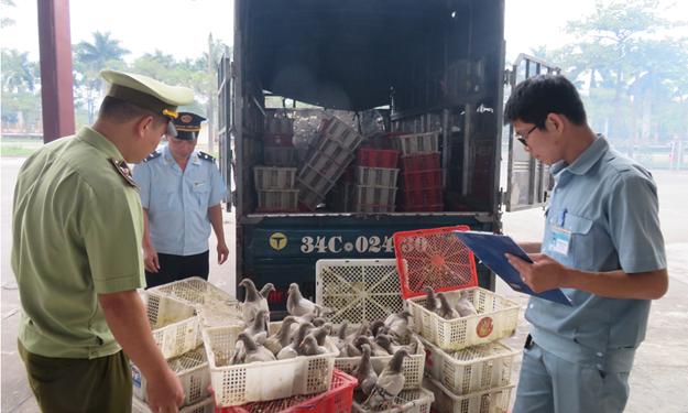 Ngăn chặn hiệu quả hoạt động buôn lậu