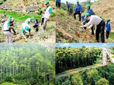 Chính phủ: Hỗ trợ ngân sách nhà nước trong đầu tư bảo vệ và phát triển rừng