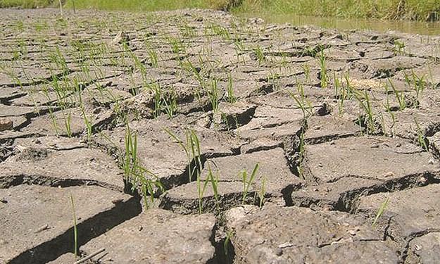 Nghiên cứu ảnh hưởng của biến đổi khí hậu tới kinh tế nông nghiệp Việt Nam