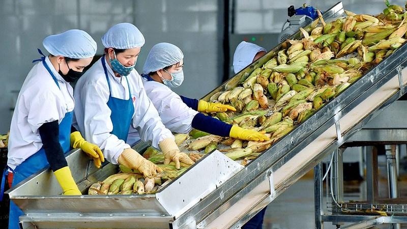 Triển khai giải pháp sản xuất, tiêu thụ nông sản trong điều kiện dịch Covid-19
