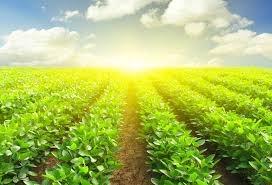 Tổ chức công tác kế toán hợp tác xã nông nghiệp trên địa bàn tỉnh Quảng Ngãi
