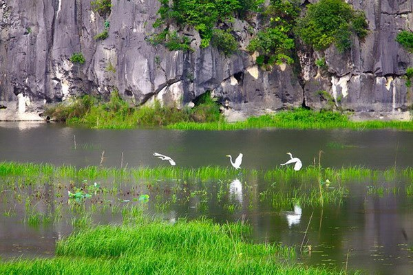 7 vai trò của đất ngập nước đối với con người và thiên nhiên