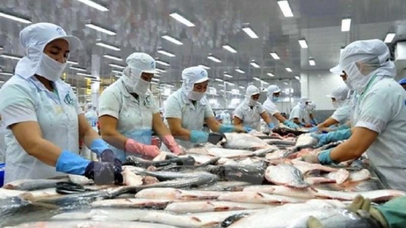 Đầu tư nâng cao chất lượng cá tra để tăng sức cạnh tranh