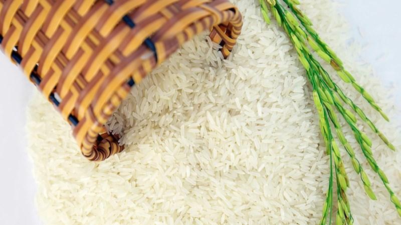 Giá lúa gạo ngày 1/6: Giá lúa gạo chững đà giảm