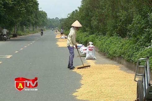 [Video] Mất an toàn giao thông vì tình trạng phơi thóc trên Đại lộ Thăng Long