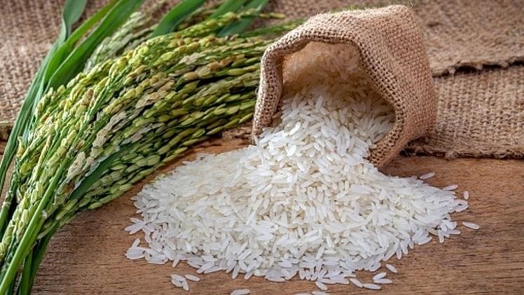 Giá lúa gạo hôm nay 31/7: Giá lúa tiếp tục giảm