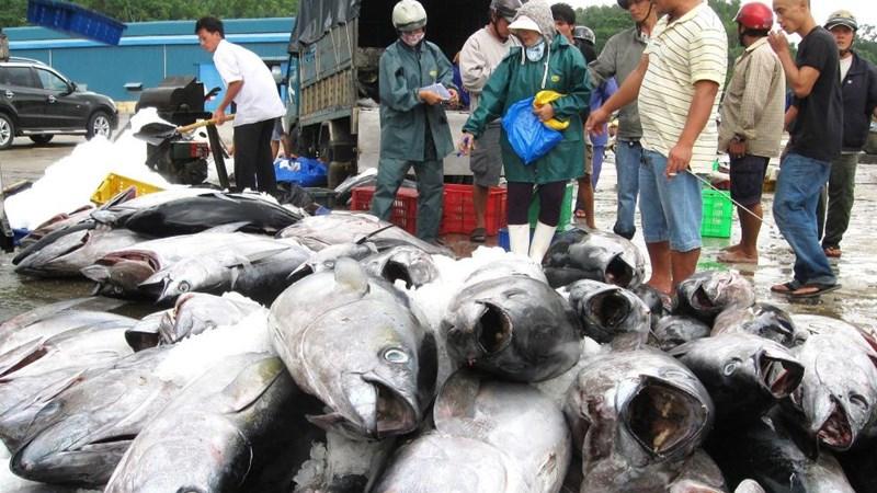 Đánh giá hiệu quả kinh tế từ khai thác cá ngừ đại dương tại tỉnh Phú Yên
