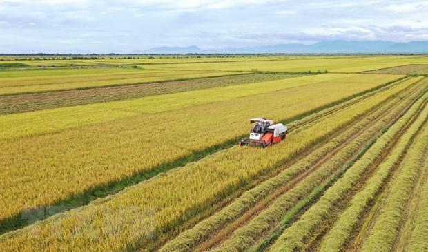 [Infographics] Ưu đãi hạn ngạch thuế quan khi xuất khẩu gạo sang EU