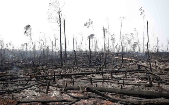 [Video] Các nước G7 chi hàng chục triệu euro bảo vệ rừng Amazon