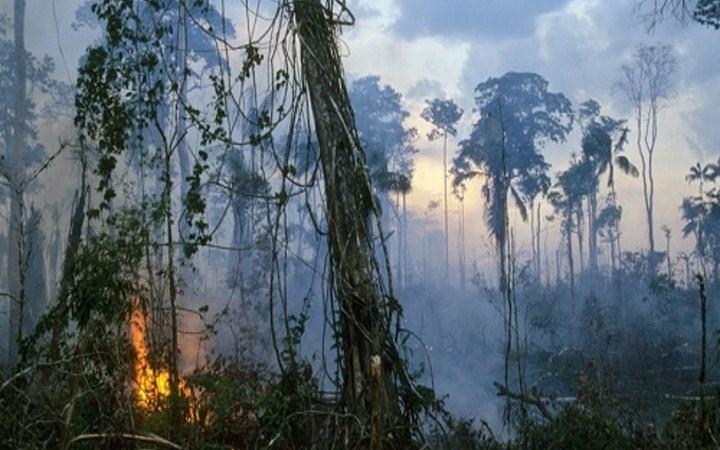 [Video] Hậu quả nếu rừng mưa Amazon bị phá hủy hoàn toàn