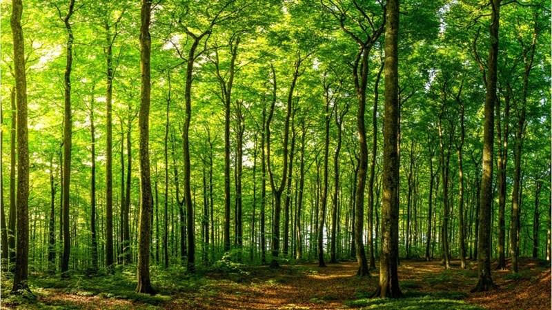 [Video] Cây xanh - vị cứu tinh trong cuộc chiến chống biến đổi khí hậu