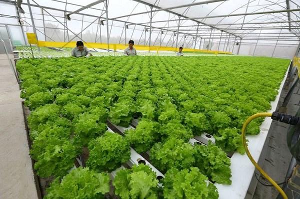 Hà Nội: Phân vùng sản xuất bảo đảm nguồn cung nông sản cho người dân