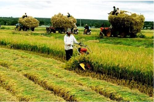 Tình hình sản xuất nông nghiệp 8 tháng năm 2019