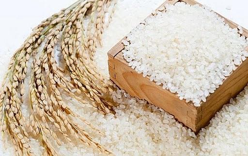 Giá lúa Thu đông ở mức thấp, giá gạo tăng trở lại