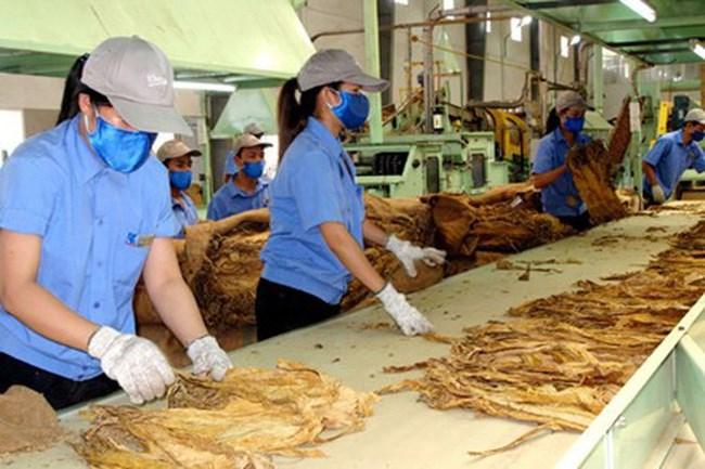 Nhập khẩu thuốc lá nguyên liệu theo hạn ngạch thuế quan cam kết tại Hiệp định CPTPP