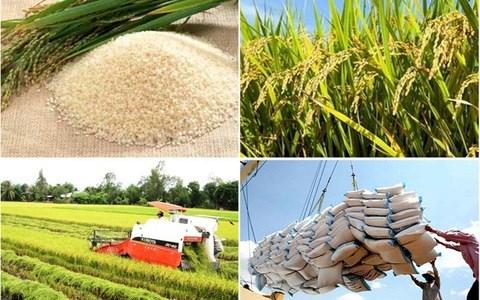 Bộ Công Thương kiến nghị Chính phủ tiếp tục cho xuất khẩu gạo trở lại