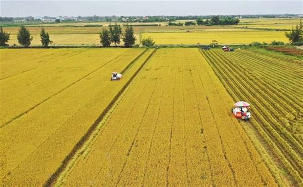 Bộ Tài chính phối hợp điều tiết linh hoạt để đảm bảo an ninh lương thực quốc gia