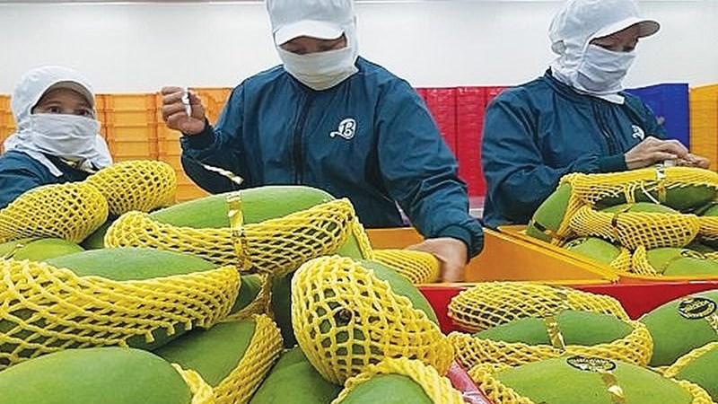 Đâu là chìa khóa thích ứng của nông sản Việt hậu COVID-19?