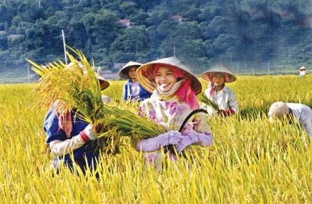 Bộ Tài chính tiếp tục đề xuất miễn thuế sử dụng đất nông nghiệp