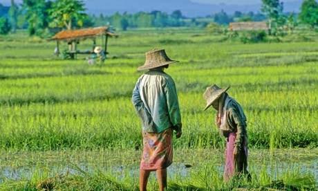 Thái Lan dành 10 tỷ USD cho kế hoạch phục hồi nông nghiệp