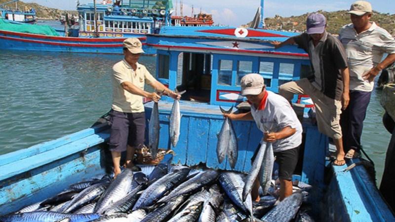 Nỗ lực triển khai các giải pháp gỡ 'thẻ vàng' đối với thủy sản Việt Nam