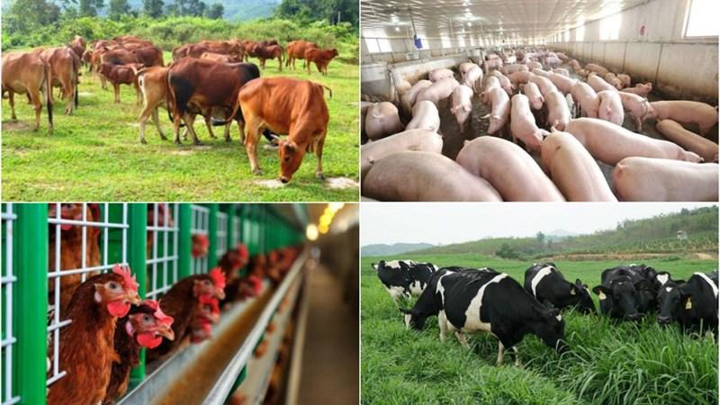 Phạt đến 200 triệu đồng nếu vi phạm hành chính về chăn nuôi