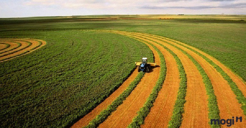 Miễn, giảm thuế sử dụng đất nông nghiệp: Hỗ trợ trực tiếp tới người nông dân