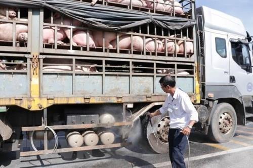 An Giang kiểm soát vận chuyển lợn ở khu vực biên giới