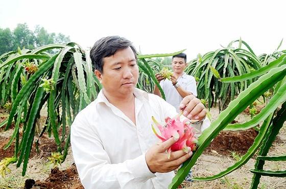 Việt Nam xuất khẩu chính ngạch nông sản vào thị trường khó tính