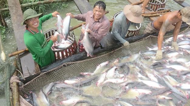 Xuất khẩu cá da trơn: Tin vui rộng đường vào Mỹ