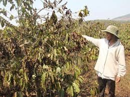 Chuyển đổi cơ cấu vườn cây, giảm thiệt hại do hạn hán