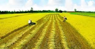 Ngành Nông nghiệp: Chủ động ứng phó với các tình huống cấp bách