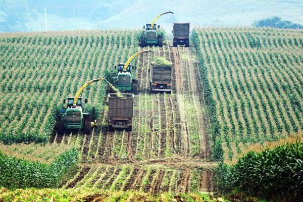 Dồn dập làn sóng đầu tư của các doanh nghiệp vào nông nghiệp